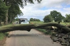 Endon - Removal of Beech Tree